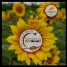 img MEDAILLES CHATEAU TOUR CASTILLON ARGENT CONCOURS DE BORDEAUX - BRONZE CONCOURS DE PARIS